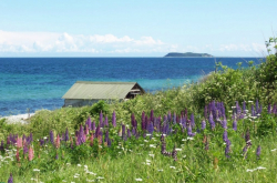 Sea-view-with-grass-and-flowers