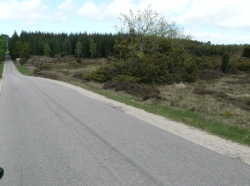 motorcycle-road-through-heath-dunes