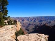 Grand Canyon med træ og klipper