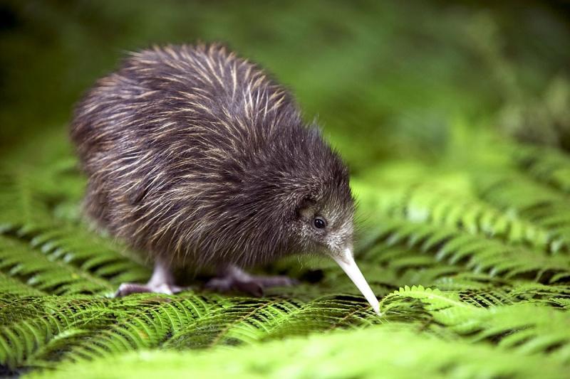 Tour New Zealand roundtrip image