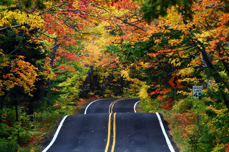 Motorcycle Tour Rides Tunnel Of Trees Tour In Usa