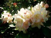 Tour 1.Rhododendron parken.km 52.Tid1,30 image